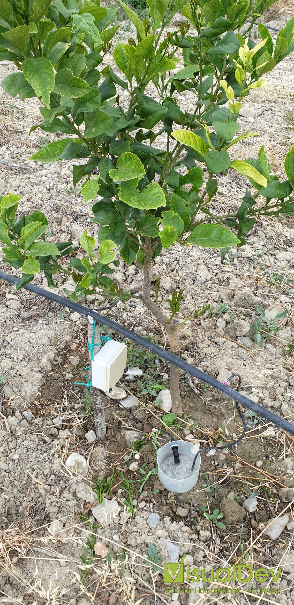 Controllo avvio irrigazione